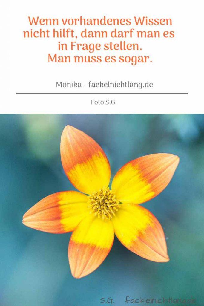 Blume von S.G. mit Zitat Wenn vorhandenes Wissen nicht hilft im Beitrag zu Vision Ziele Warum Psyche